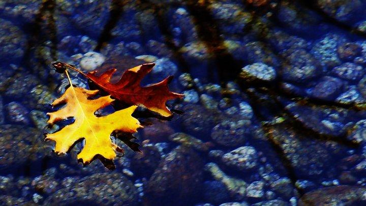 leaves_in_a_stream_by_ticktix-d4xbsek